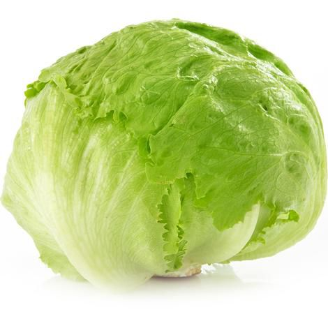 Cabbaged lettuce